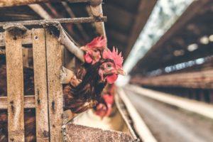 9 miti sui vegani - VeganPoint
